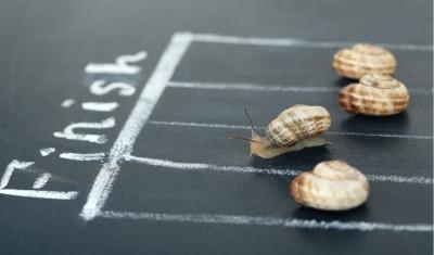 snails in a race